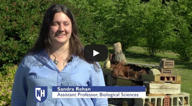 Bee Research video