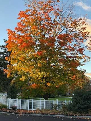 image of autumn tree