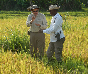 Drew Conroy and Fiston Marc Malago examining rice at WVI's Maliba Farm - DRC