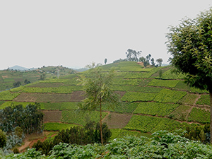 Rwanda is one of the most intensively farmed areas in Sub-Saharan Africa