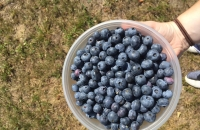 Superfood Spotlight: Blueberries