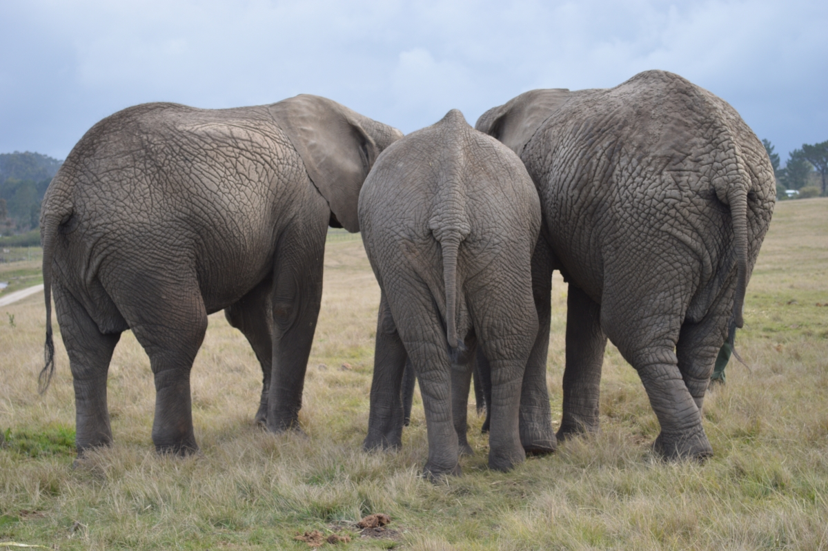 Social Behavior and Personality Patterns of Captive African ...