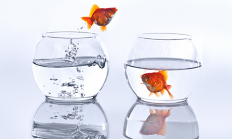 Gold fish jumping out of one fish bowl into another