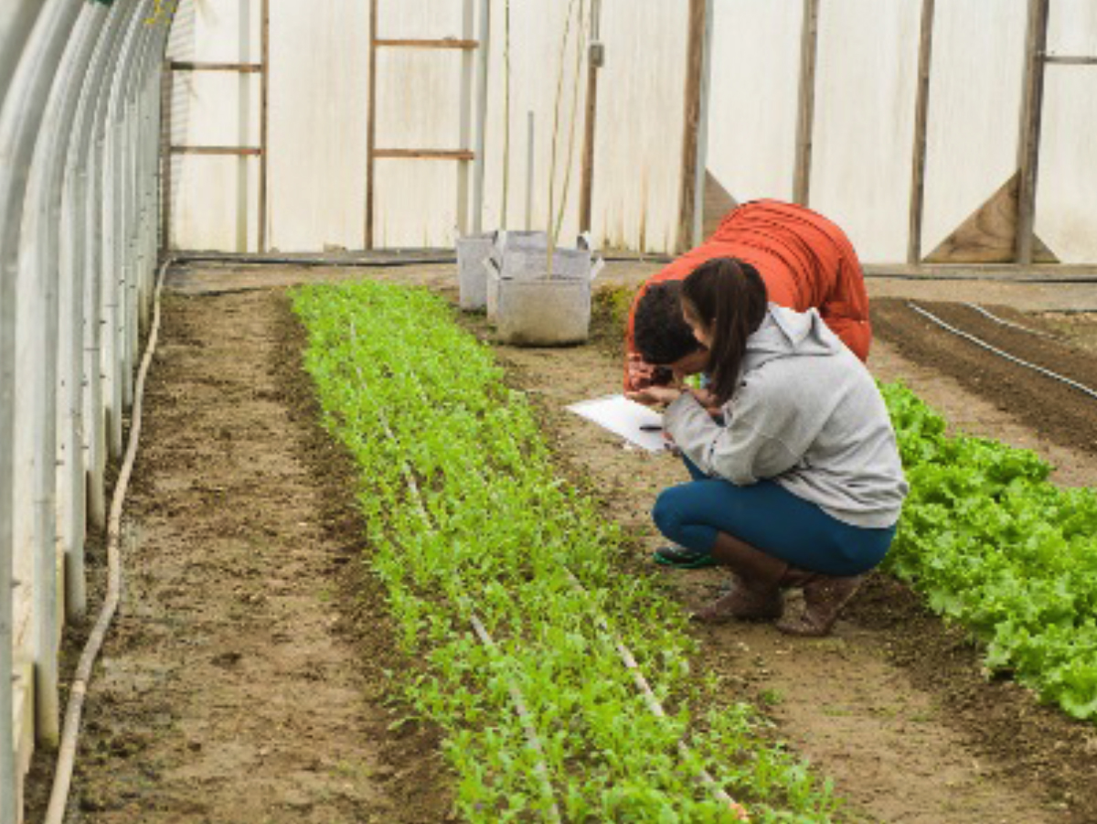 researchers recording data in a greenhouse