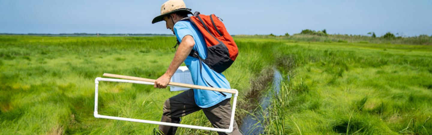 Researcher carrying transept strides over ditch in salt marsh