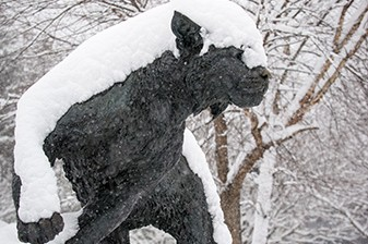 Wildcat statue in the snow