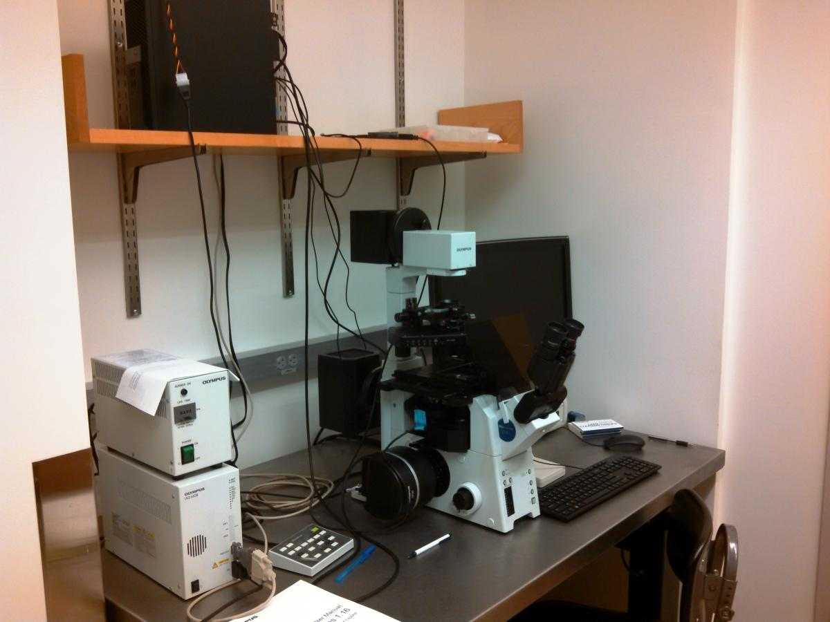 The Olympus IX81 inverted fluorescense/brightfield microscope.