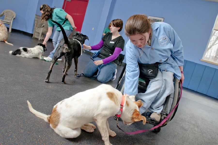 A photo of service animals being trained
