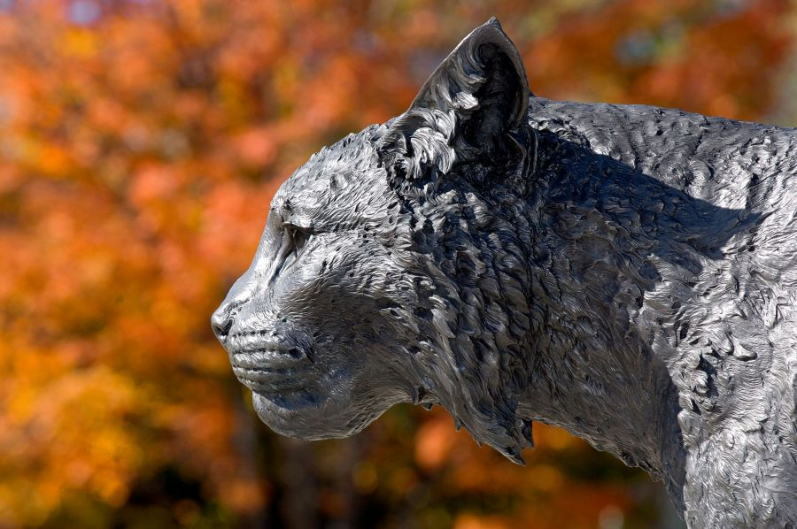 A photo of the wildcat statue