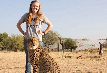 UNH student working with cheetahs