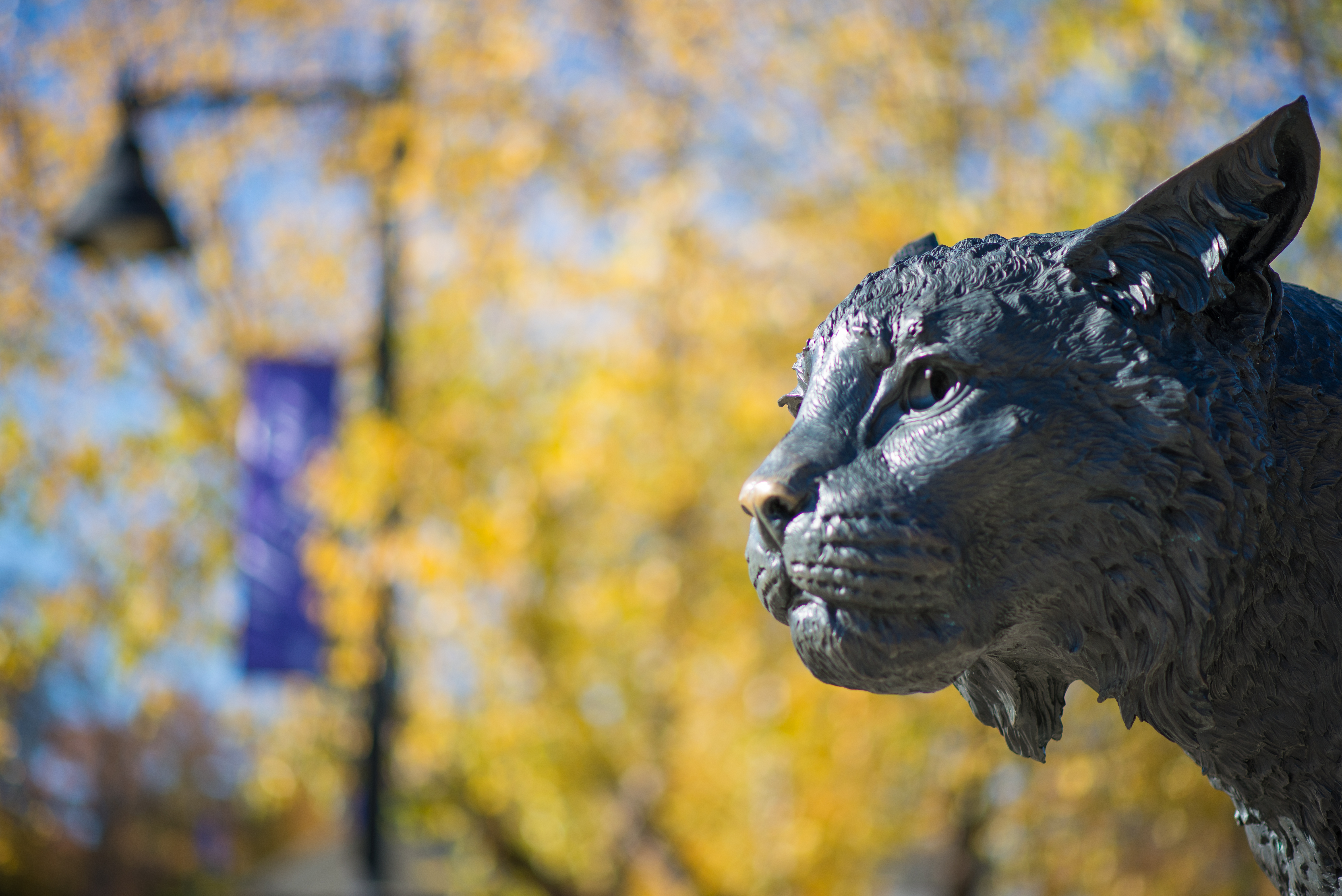 Photo of UNH Wildcat statue