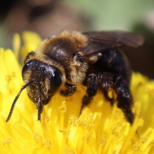 Close-up of bee pollinating a yellow flower