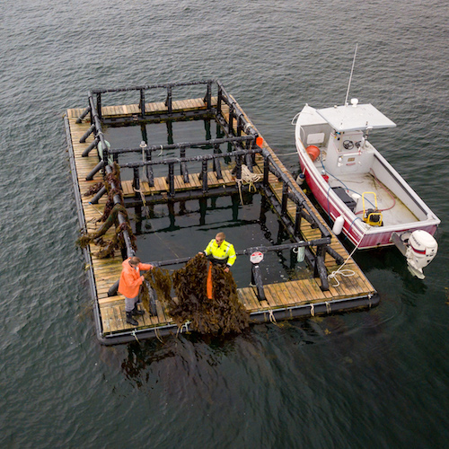 Overhead image of aquaculture pen with small boat beside it