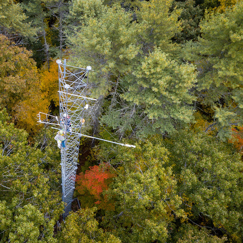 Researchers on a tower high above a forest