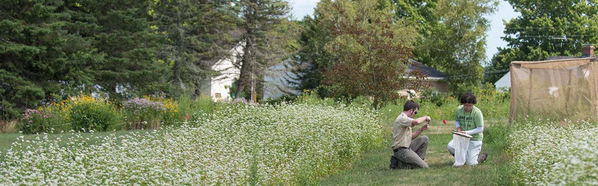 UNH sustainability students conduct field research