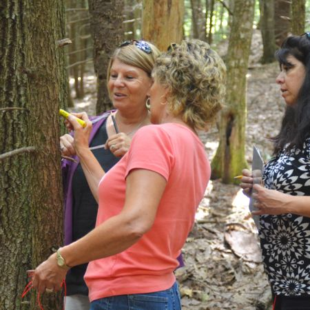 Three women measuring a tree