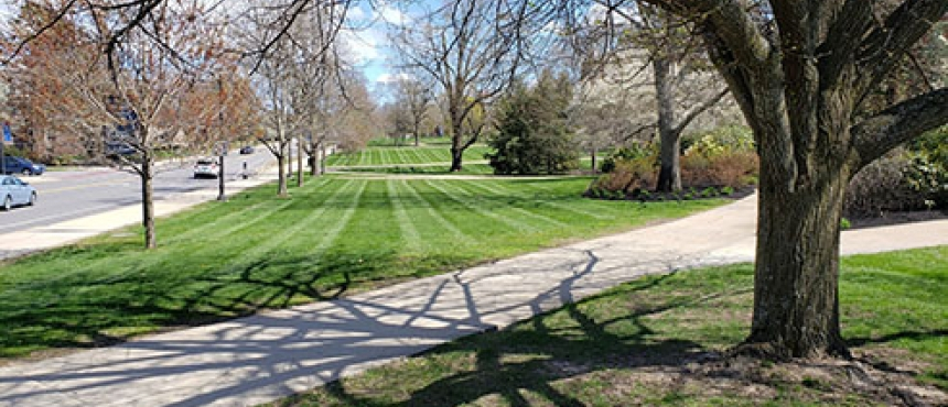 New buds on the trees and look at those perfect mow lines.