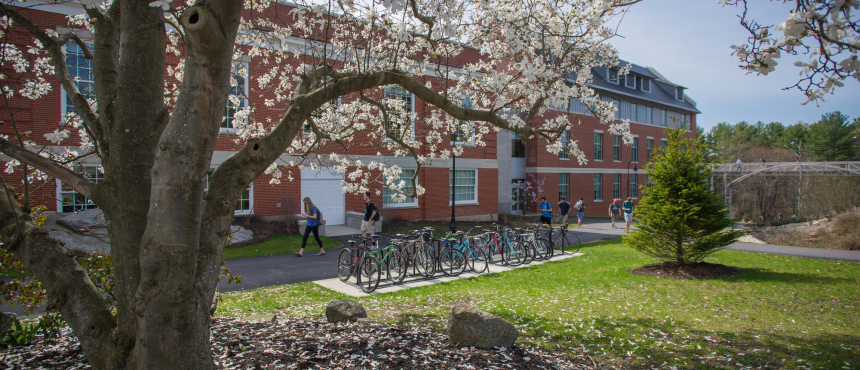 A photo of a blooming tree on UNH campus