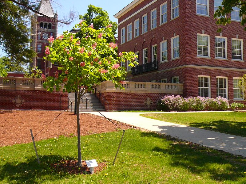 A flowering memorial tree in front of T-Hall at UNH.