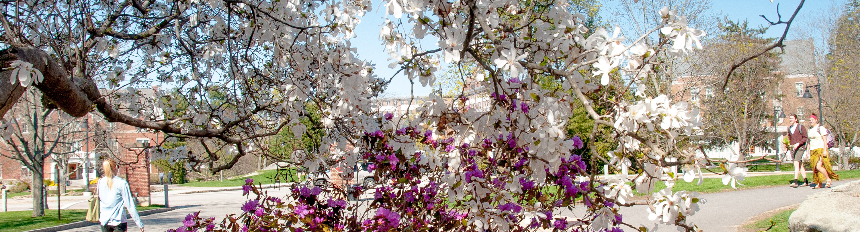 Image of UNH campus and flowers