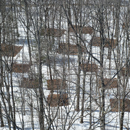 Overhead shot of snowy forest with square bare plots