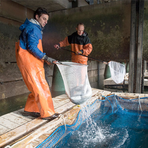 Fisheries Research - aquaculture project