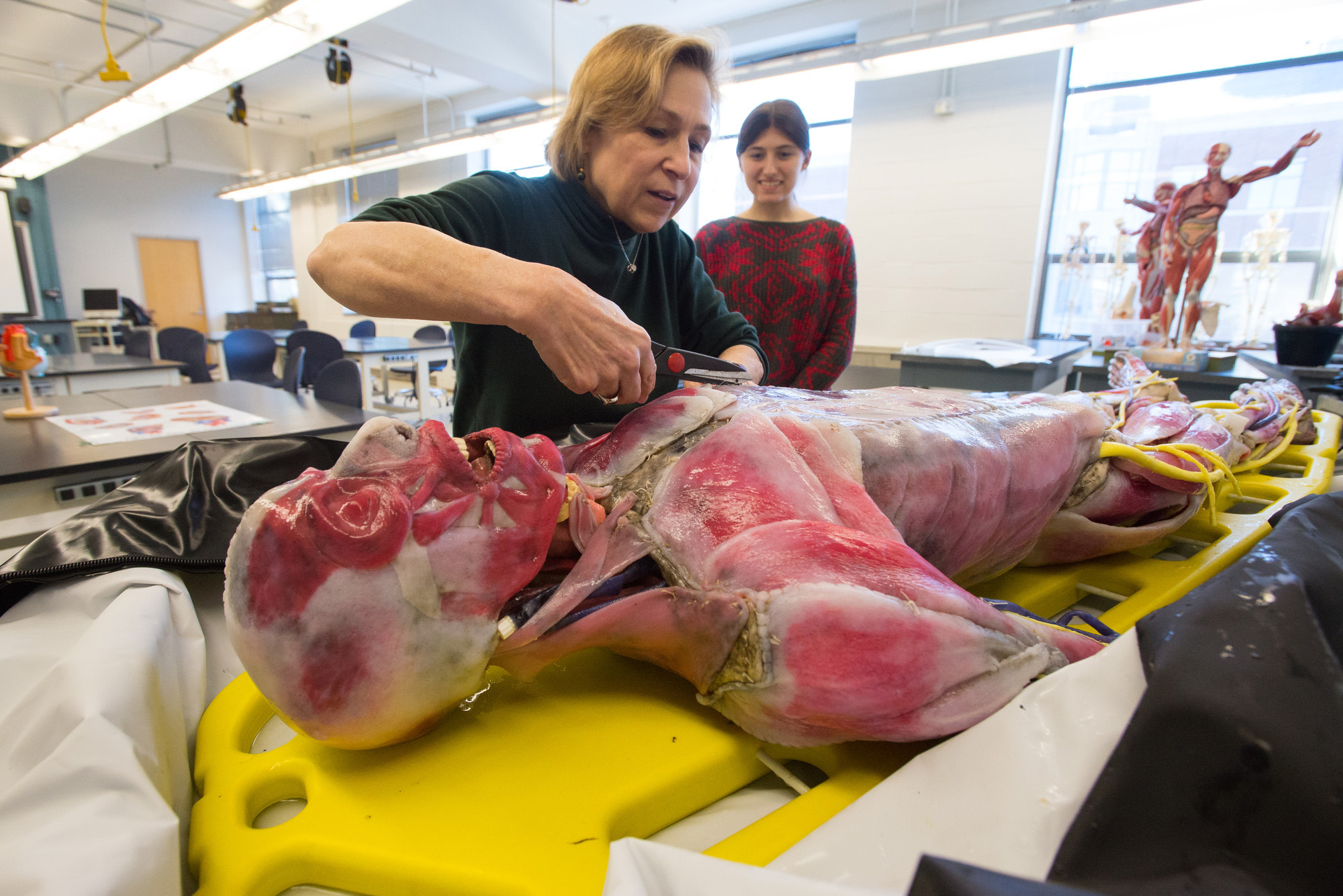Xena, UNH's synthetic cadaver