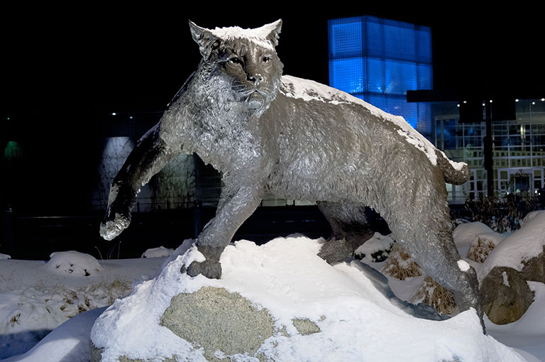 UNH January Term - Wildcat Statue