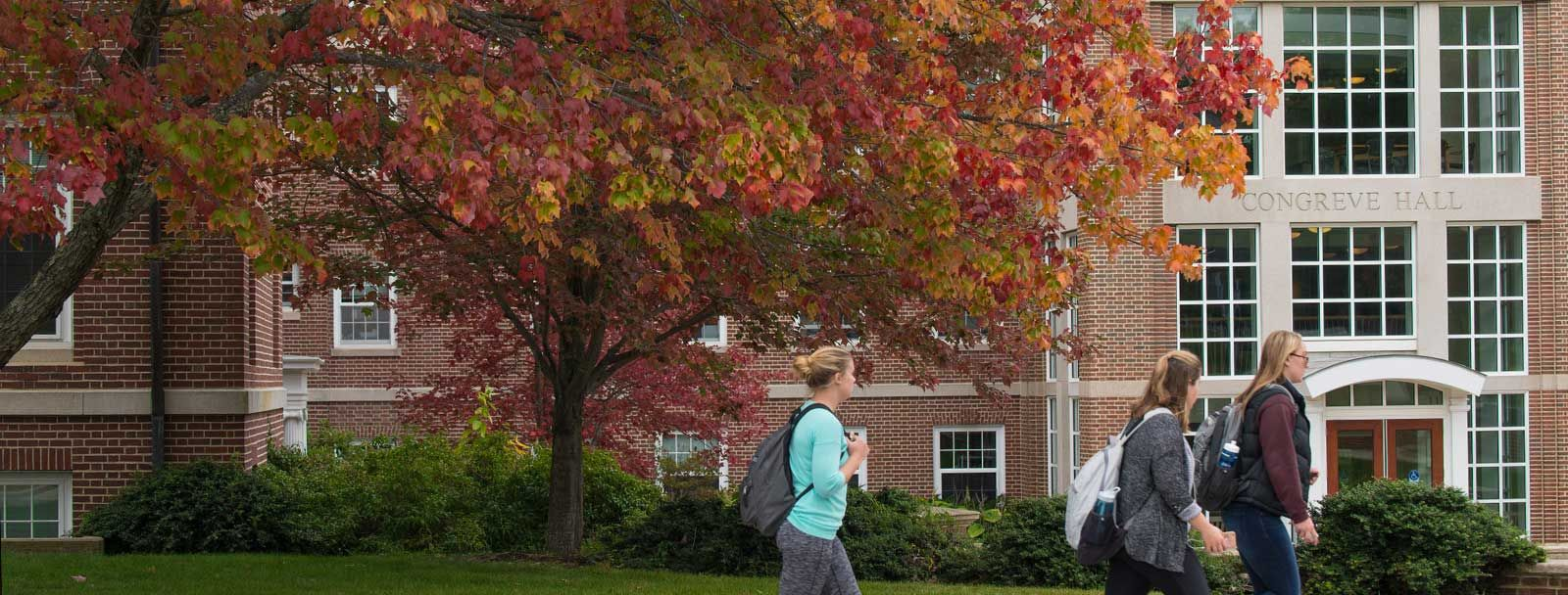 A colorful tree in front of Congreve Hall at UNH