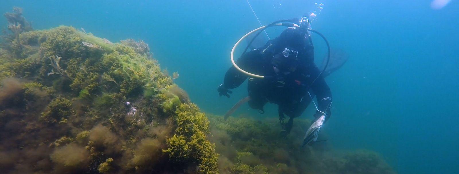 UNH Shoals Marine Lab divers