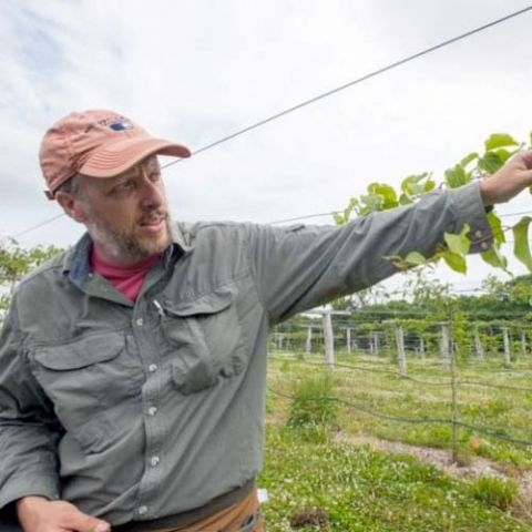 Kiwi farming in New Hampshire