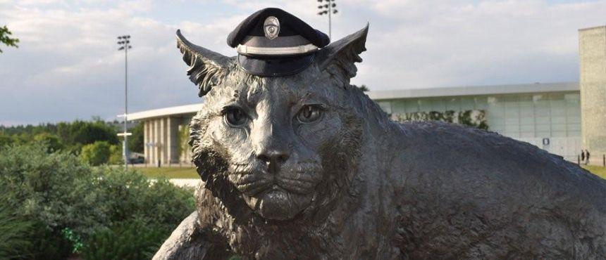 Wildcat Cop