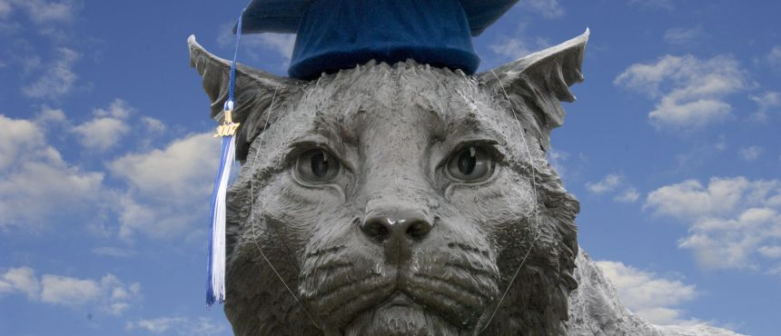 An image of a Wildcat with a Graduation Cap