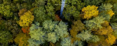Aerial of Woods in the fall