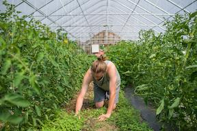 student working in high tunnels