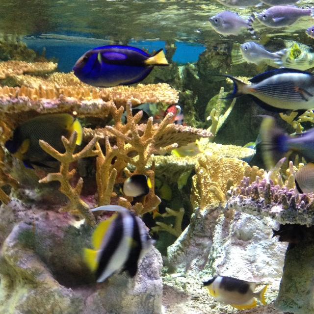 Plan Your Day Trip to the Boston Aquarium