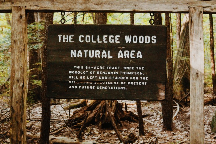 Into the (College) Woods