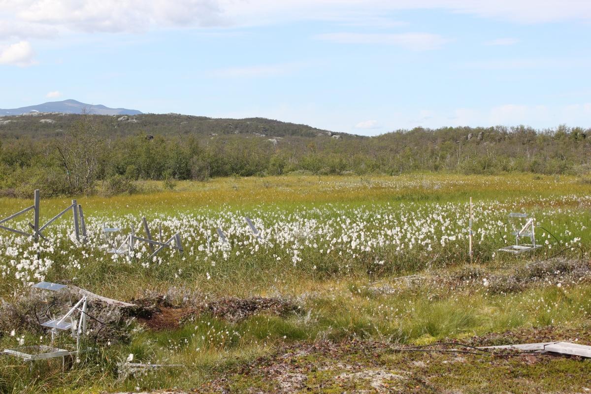 pântanos totalmente descongelados no Círculo Polar Ártico em Abisko, Suécia