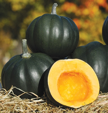 UNH-developed acorn squash