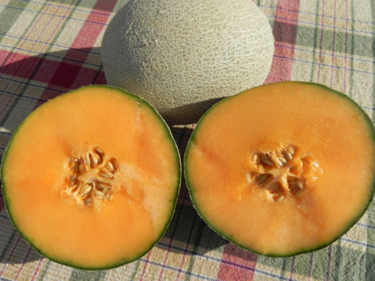 UNH-developed cantaloupe variety