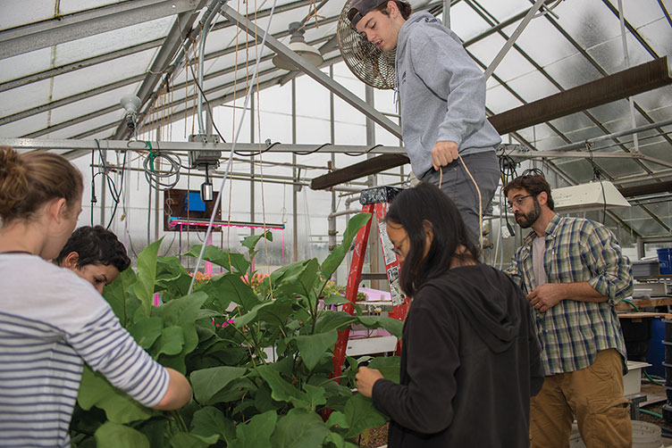 UNH students working in the greenhouse