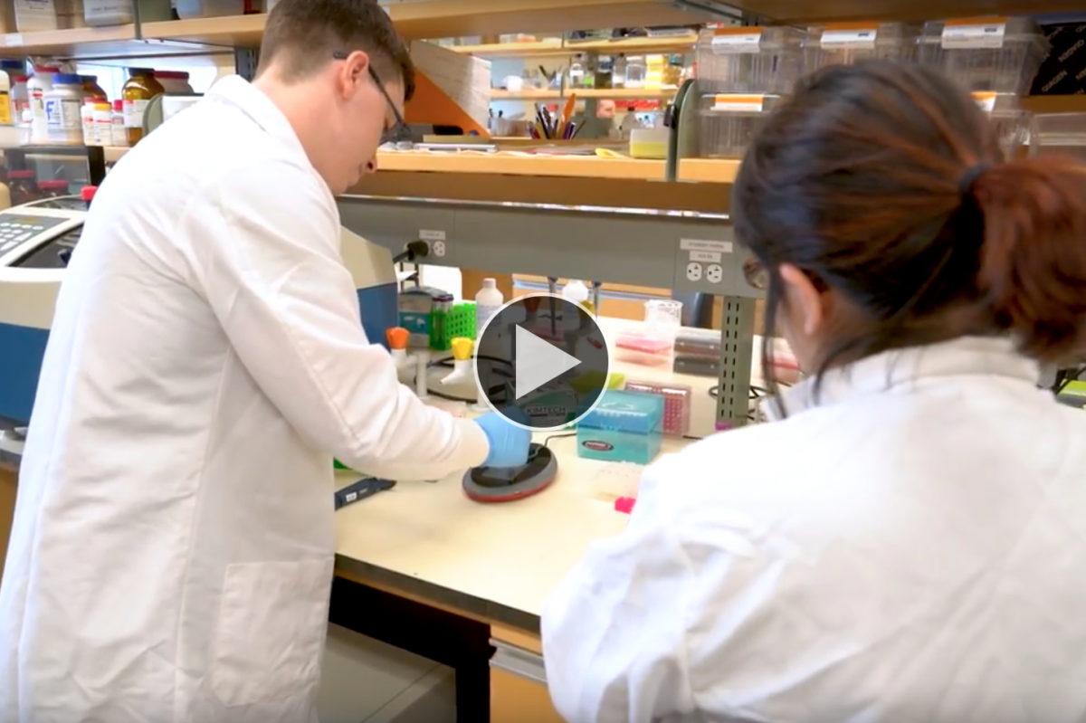 UNH graduate students working in the Hubbard Genome Center