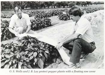 UNH plant biology professors Otho Wells and Brent Loy in a 1987 photo