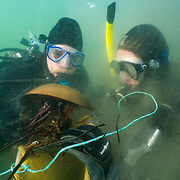 Win Watson and Meghan Owings diving with horseshoe crab