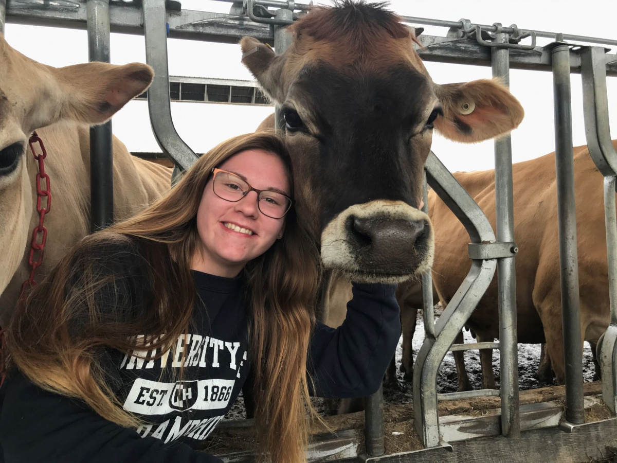 UNH's Jessia Fury '19 with Jersey cow Andie
