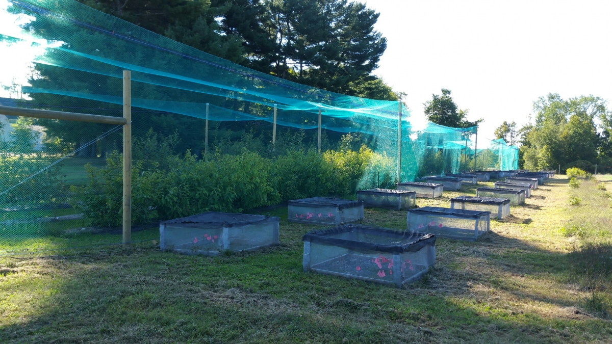unh researchers study economics of managing invasive plants in