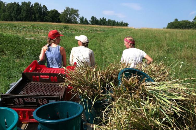 students at farm internship