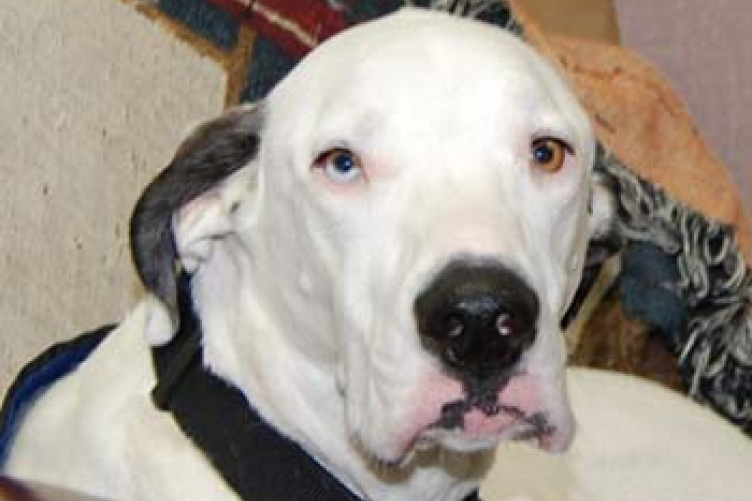 hamilton therapy dog