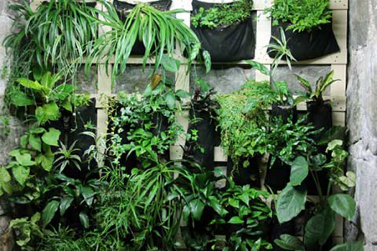 plants along living wall