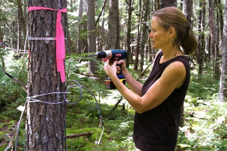 Ecohydrologist Heidi Asbjornsen